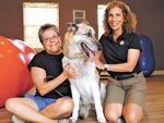 Dogs get healthy at Rocky's Retreat