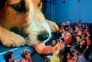 Nov. 1994: Honey, I shrunk the Audience opens.