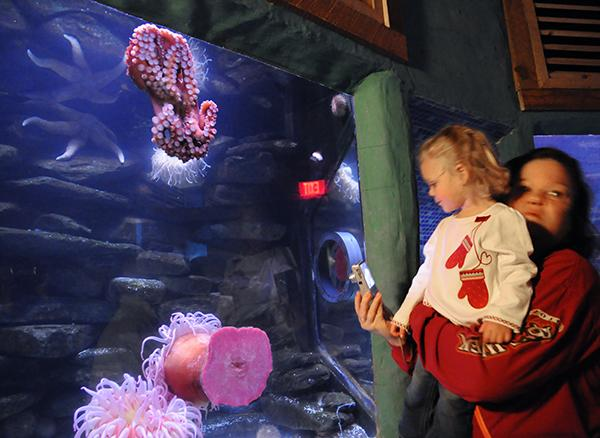 A young guest gets a boost to view a giant octopus in SeaWorld's Manta Aquarium.