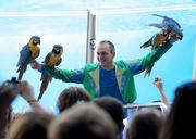Parrots also fly around the stadium during the show, and return to their trainer's arm.