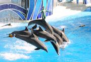 Blue Horizons becomes an air show as dolphins leap while parrots do a fly by.