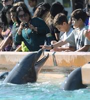 The dolphins take a lunch break after their performance as guests enjoy a meet and greet at the dolphin feeding area in Dolphin Cove.