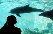 Dolphin Cove comes complete with an underwater viewing window opposite the feeding area.