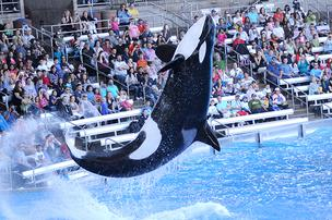 SeaWorld Parks & Entertainment is making a splash with its new mobile websites and ticketing for its theme parks.