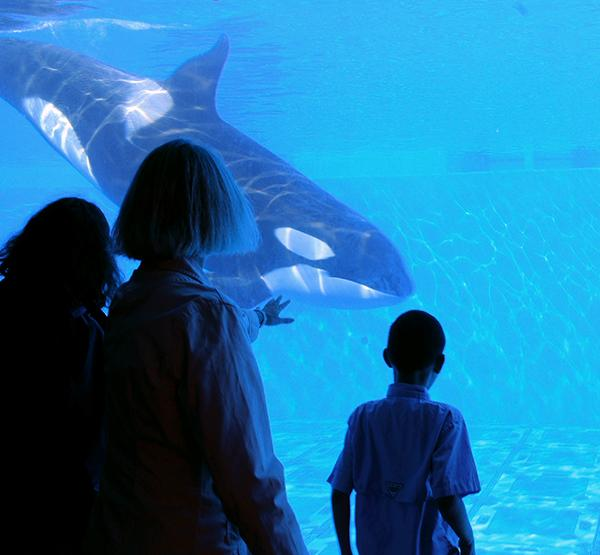 Blackfish, a film about the 2010 death of SeaWorld Orlando trainer Dawn Brancheau and the life of killer whales in captivity, will be released in theaters July 19.