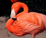 Flamingos are one of the non-underwater species that reside in the park.