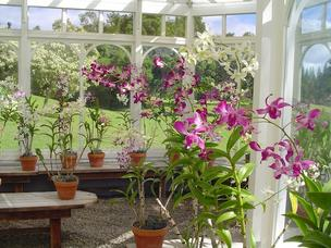 Orchids in a greenhouse behind the Four Seasons Resort Lanai — The Lodge at Koele, seen in this 2009 file photo, are among the possessions on Lanai David Murdock plans to keep after selling most of the island to Oracle Corp. CEO Larry Ellison.