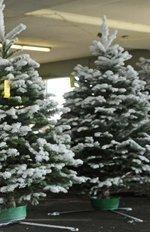 Matson's 'Christmas Tree Ship' arrives Saturday in Honolulu