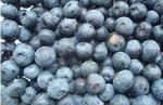 Why blueberries are getting cheaper