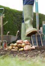 Urban farming company wins Temple competition