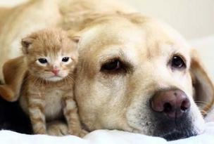 Holiday spending on dogs and cats is expected to be robust this year.