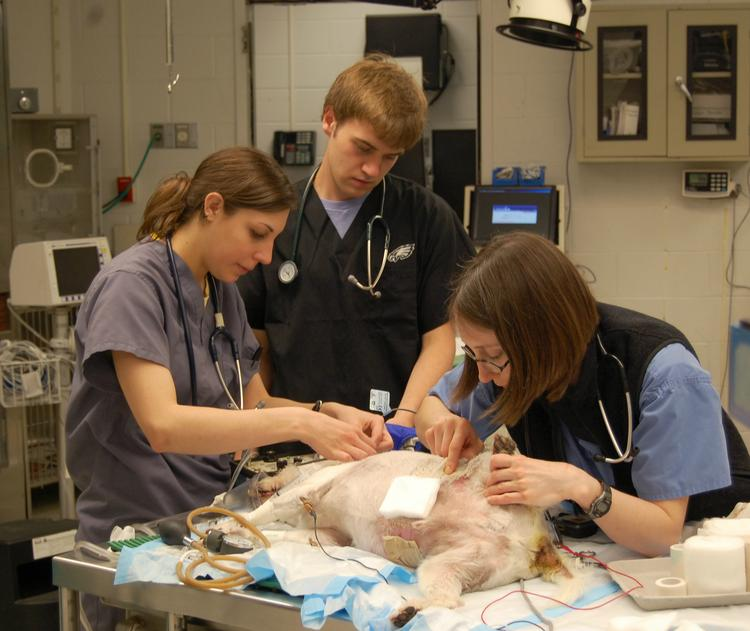 Vet students prepare a Ryan Hospital patient for surgery