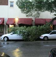 One branch managed to fall on two cars at 47th and Pine streets in Philadelphia.