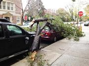 This downed tree branch blocked 47th Street traffic at the corner of Pine Street in West Philadelphia in addition to crushing the car.