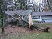 A tree that toppled dangerously close to a home on Limekiln Pike in Horsham.