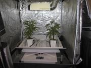 AZ Grow Rooms offers to grow plants for medical marijuana cardholders.
