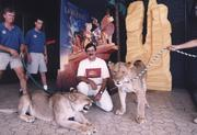 "Harkins Theatres has seen many premiers, including ""The Lion King,"" which featured CEO Dan Harkins getting a visit from some large cats."