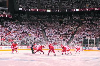 Phoenix Coyotes fans cheer on the team.