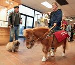 Arizona bill would include miniature horses as guide, service animals