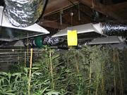 These plants were found growing in two grow houses in Tempe where the supply of marijuana for Top Shelf Hydro College was grown and cultivated.