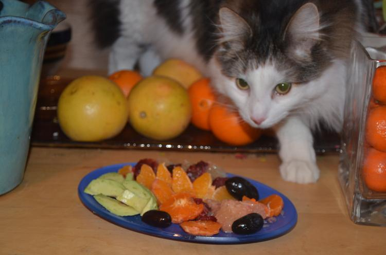 Citrus-avocado salad as respite from fried fish. Sawyer the cat, not part of the recipe, lunges for olives.