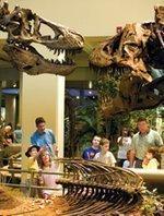 Museum names interim leadership team