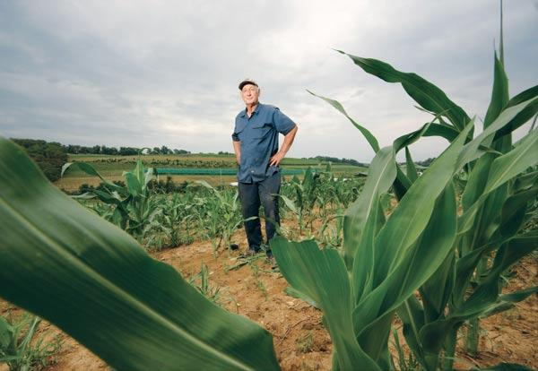Tim Trax, co-owner of Trax Farms in Finleyville, said in a normal growing season the corn would be as tall as him by now. But with the drought, the crop probably won't reach a height of five feet.