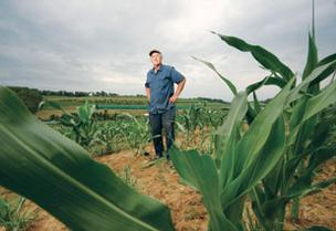 Tim Trax, co-owner of Trax Farms in Finleyville, said in a normal growing season the corn would be as tall as him by now, but with the drought, the crop probably won't reach a height of five feet.
