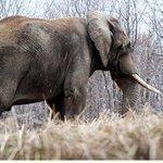 Pittsburgh Zoo uses elephants' waste to heat new Somerset breeding facility
