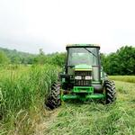 Advocates hope switchgrass doesn't dry up with end of incentives