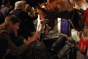 Cisco, one of Cavalia's 50 horses, greets members of the audience after the performance.