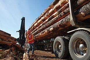 Cross & Crown's Jerry Smith secures a load of outgoing freshly cut logs at a logging site near Hagg Lake.