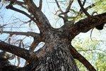 Sacramento gets national nod as urban forest