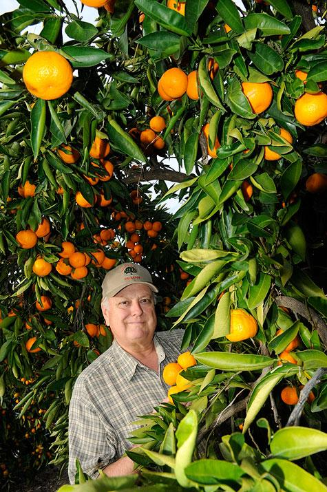 Tom Aguilar at Mandarin Hill Orchards in Penryn said the Mountain Mandarin Growers' Association decided to hire a marketing firm to come up with a way to attract visitors because farmers are focused on farming, but need buyers.