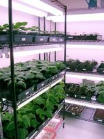 Marrone Bio buys manufacturing plant in Michigan