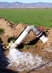 Groundwater is pumped into a ditch to flood the rice fields of the Rominger Bros. Farms in Winters.