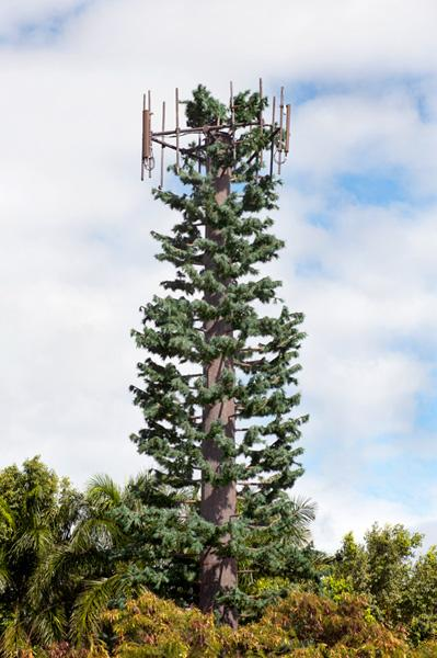 Cell phone antennas can be disguised as pine trees.