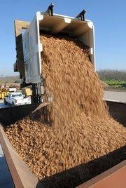 Walnut shells are dumped into the Bio Max 100, a biomas-powered generator.