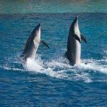 PETA buys stake in SeaWorld