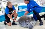 SeaWorld and Litton Entertainment to air weekly TV series on ABC