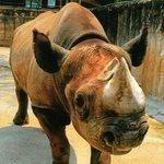 San Antonio Zoo's black rhino, Herbie, expires
