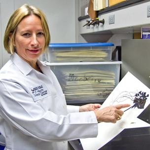 Susan Mooberry, Ph.D., is the lead researcher developing a compound derived from the Southeast Asian bat plant that could prove to be a potent anti-cancer drug.