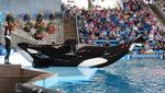 SeaWorld goes public, files for IPO