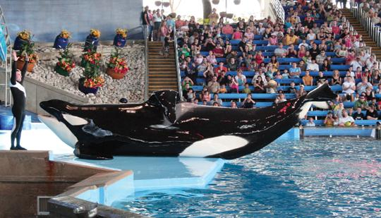 Texas and Oregon State players got the chance to visit SeaWorld San Antonio before they hit the practice field in anticipation of Saturday's Valero Alamo Bowl.