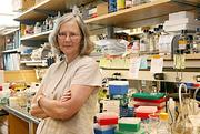 UCSF's Elizabeth Blackburn shared the 2009 Nobel Prize in physiology or medicine for her work discovering how chromosomes are protected by telomeres and the enzyme telomerase.