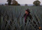 Jose Pilar Contreras, founder of Don Pilar, plants agave near his home town of San Jose de Gracia, Jalisco, Mexico.