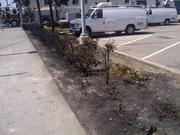 Bushes at the West Oakland BART station across the street from the burnt apartment site were also charred.