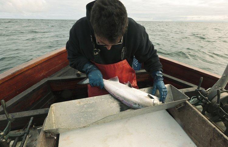 Fishing for salmon off California's coast.
