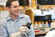 """Ophir Klein of UCSF is investigating a stem cell therapy for inflammatory bowel disease that uses """"organoids"""" delivered to the intestines to repair damage."""