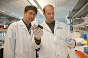 Jason Pomerantz (right)will harvest stem cells from human muscle to develop transplant techniques and test the muscle in disease models.